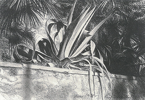 Agave in Arco